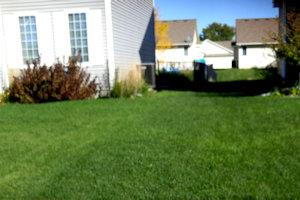 beautiful fertilized lawn
